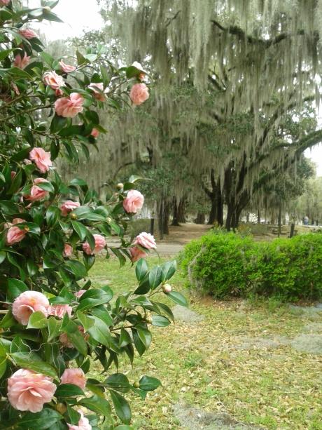 Spring Blossoms, Live Oak Cemetery, Selma, AL